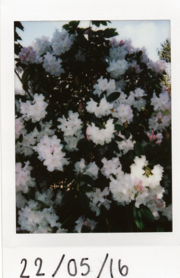 polaroids005copy